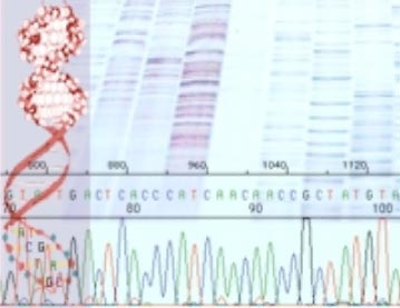 A gene is a discrete sequence of DNA nucleotides.
