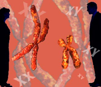 Specialized chromosomes determine gender.